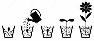 plan-de-croissance-de-plantes-de-graine-à-la-fleur-48866659
